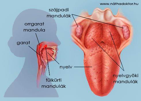 a mandula